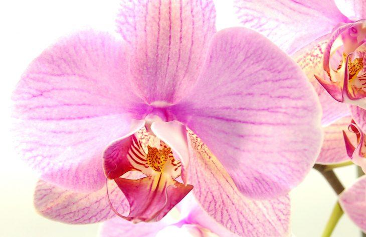 Orchidee Ratgeber